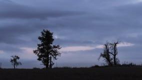 Trockene Bäume Lizenzfreie Stockfotos