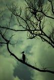 Trockene Bäume mit einem Vogel Stockfoto