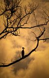 Trockene Bäume mit einem Vogel Lizenzfreie Stockbilder