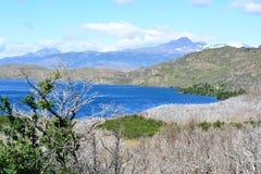 Trockene Bäume und ein See an Nationalpark Torres Del Paine, Chile Lizenzfreie Stockbilder