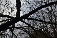 2 trockene Bäume und Herbstniederlassungen im Gegensatz zu dem blauen Sonnenunterganghimmel Stockfotografie