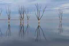 Trockene Bäume versenkt in den See stockbilder