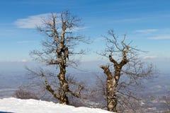 Trockene Bäume Stockfoto