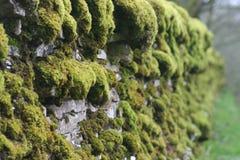 Trockene Backsteinmauer bedeckt im Moos lizenzfreie stockfotografie