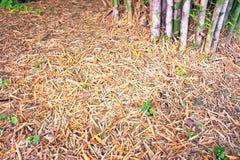 Trockene Bambusblätter Stockfotografie