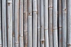 Trockene Bambuswand Lizenzfreies Stockbild