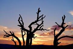 Trockene Baum-Schattenbilder auf Sonnenuntergang-Himmel Lizenzfreie Stockbilder