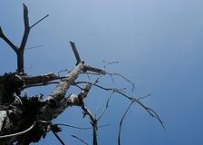 Trockene Baumaste gegen blauen Himmel Lizenzfreie Stockfotos