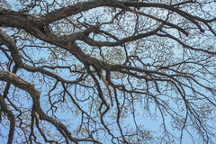 Trockene Baumaste gegen blauen Himmel, toter Baum Lizenzfreie Stockbilder