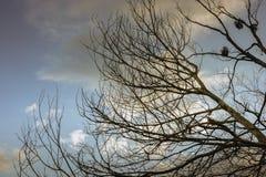 Trockene Baumaste mit blauem Himmel und Wolken Stockbild