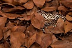 Trockene Baumblätter, zwischen Kristallen Es symbolisiert Reife und Weiblichkeit stockfotografie