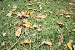 Trockene Blätter Lizenzfreie Stockfotos