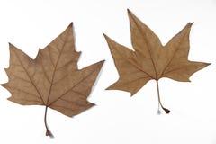 Trockene Blätter Lizenzfreies Stockfoto