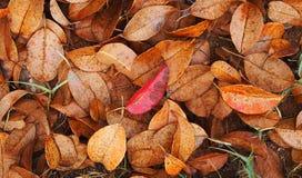 Trockene Blätter Stockbilder