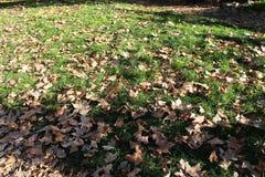 Trockene Blätter auf grünem Gras im Winter stockfoto