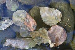Trockene Blätter von braunen, rosa und goldenen Farben liegen im empfindlichen bläulichen Wasser auf grünlichen Steinen, Herbst Lizenzfreie Stockfotografie