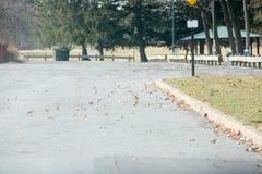 Trockene Blätter werden durch den Wind durchgebrannt lizenzfreies stockbild