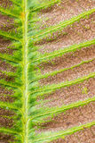 Trockene Blattbeschaffenheit Stockbilder
