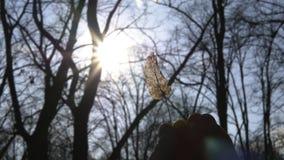trockene Blattholding der Torsion in den Fingern gegen Sonne im Wald stock video footage