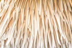 Trockene Blattpalme für Hintergrund Lizenzfreies Stockbild