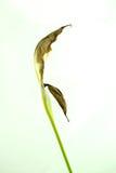 Trockene Blume 05 Lizenzfreie Stockfotografie