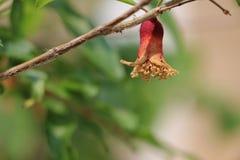 Trockene Blume Lizenzfreie Stockbilder