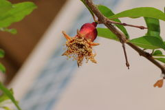 Trockene Blume Lizenzfreies Stockfoto