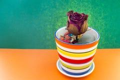 Trockene Blume eine Rose in einem mehrfarbigen Topf Lizenzfreie Stockfotografie