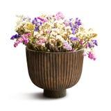 Trockene Blume im Vase Stockfotos