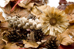 Trockene Blume mit Kiefernkegel Stockfotografie