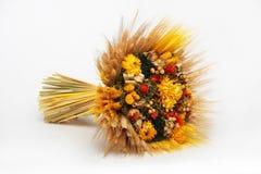 Trockene Blumen Stockbilder