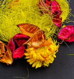 Trockene Blumen Lizenzfreies Stockbild