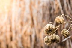 Trockene Blumen Stockfoto