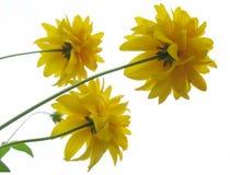 Trockene Blumen Stockbild