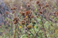 Trockene Blumen Lizenzfreie Stockfotos
