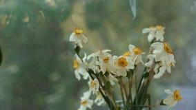 Trockene Blumen auf dem wei?en Hintergrund stock video footage