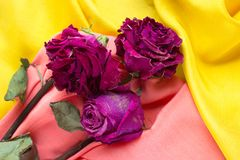 Trockene Blumen auf einem gelb-rosa Hintergrund stockfotografie