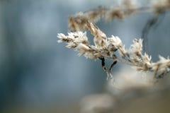 Trockene Blumen des Makrofotos auf braunen Niederlassungen lizenzfreie stockbilder