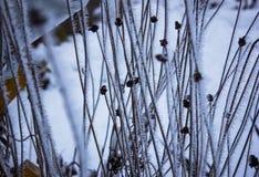Trockene Blumen im Frost Stockfotos