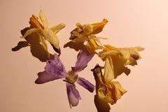 Trockene Blumen mit Schatten Stockfotografie