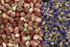 Trockene Blumenanordnung Stockfotografie