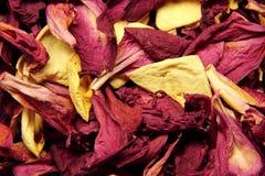Trockene Blumenblätter Lizenzfreies Stockbild