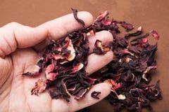 Trockene Blumenblätter von organischen Hibiscusen für Tee in der Hand lizenzfreie stockfotografie