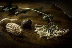 Trockene Blumenerdnussmuskatnuss lizenzfreie stockbilder