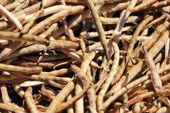 Trockene Bohnen Stockbild