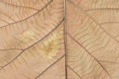 Trockene braune Blattbeschaffenheit Stockbild