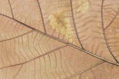 Trockene braune Blattbeschaffenheit Lizenzfreie Stockfotografie