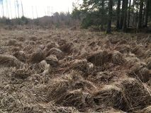 Trockene braune Grasbüschel nach Winter lizenzfreie stockfotos