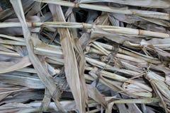Trockene cornstalks Beschaffenheit Lizenzfreie Stockfotos