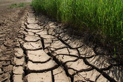 Trockene Erde lizenzfreies stockbild